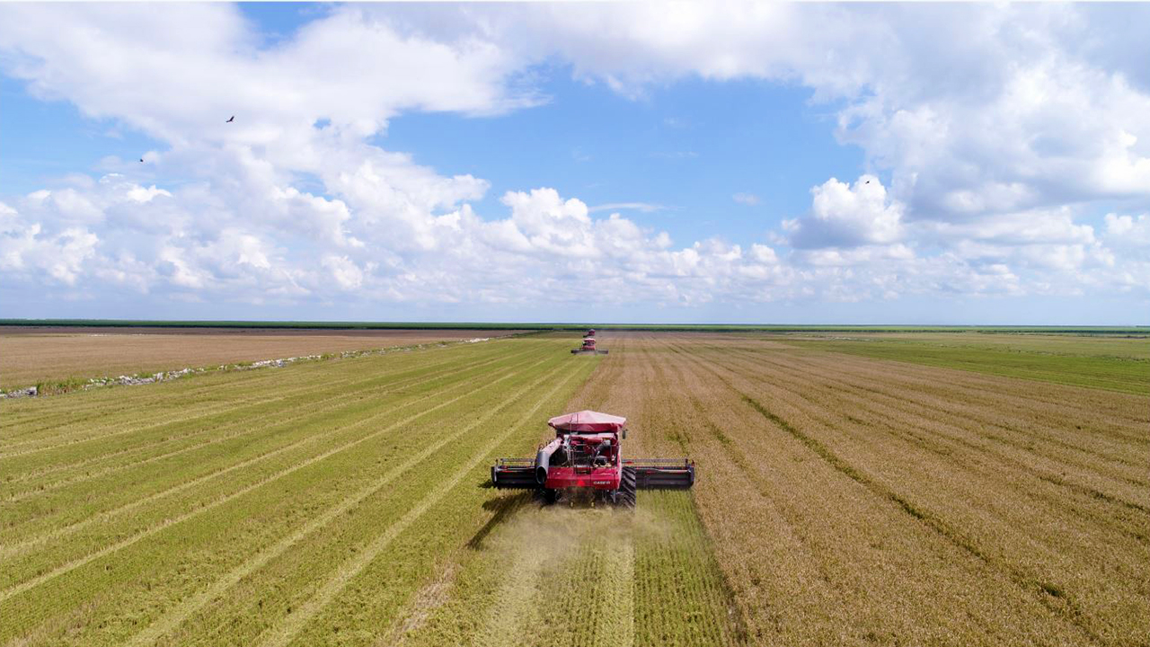 Florida Crystals' Rice Harvest in Palm Beach County, Florida